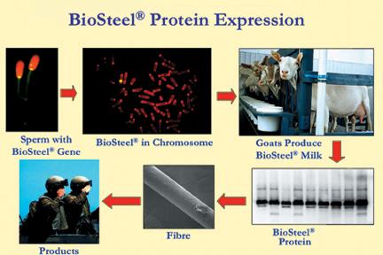 biosteel-all.jpg