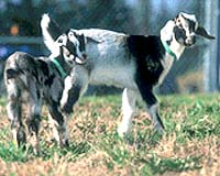 biosteel-goats-bg.jpg