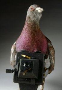 pigeon_spy.jpg