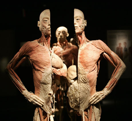 cadaver1.jpg